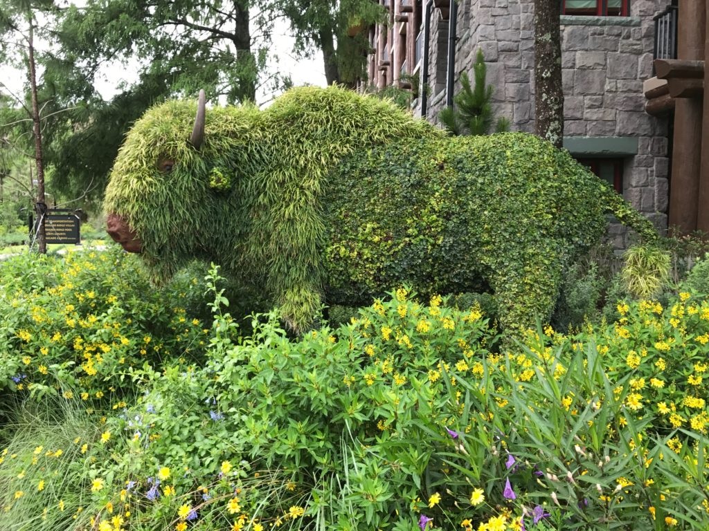 Grounds review and tour includes a buffalo topiary at Disney's Copper Creek Villas at Wilderness Lodge