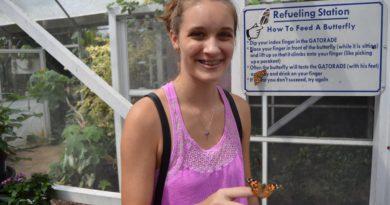 Lukas Nursery Butterfly Encounter